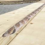ダリがパリをねり歩いた時と同じ長さ!15mのパンテーブル