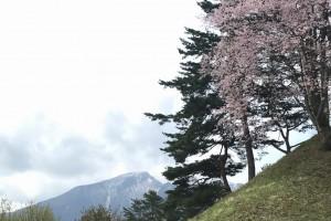 5月6日 庭園の桜と磐梯山