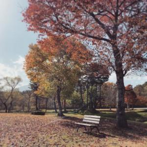 10月31日 落ち葉で埋まる当館庭園