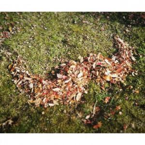 11月22日 ダリへの愛を込めた落ち葉遊び